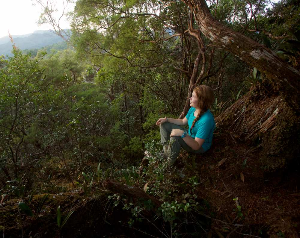 Eco Psychotherapy Reclaiming our Indigenous Relationship with Nature - Live CPD event abstract